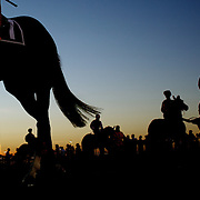 Horse and jockeys in the parade ring  as the sun sets during night horse racing at Canterbury race course, Sydney, Australia,  02 December 2009. Photo Tim Clayton