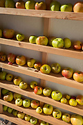 Somerset eating apples warm in afternoon sunshine on shelves outside the Pony and Trap pub, October 8th 2017, in Chew Magna, Somerset, England.