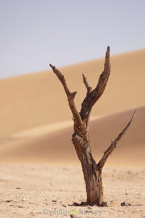 Dry tree stump in the Namib Desert, Namibia