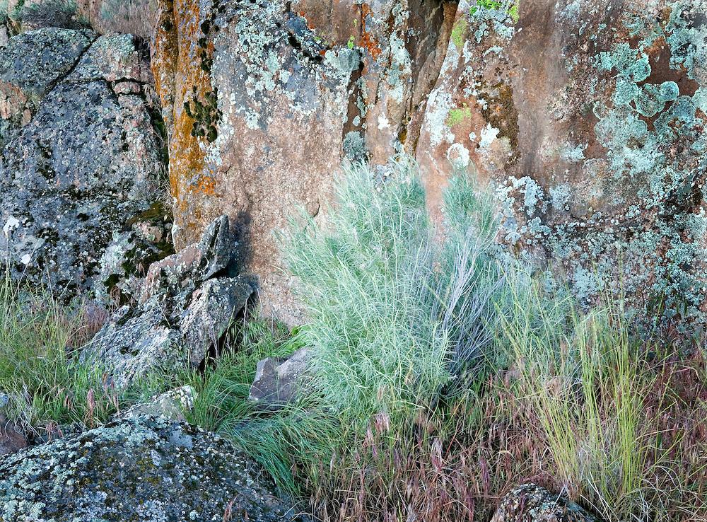 Summer Grasses Against Colorful Volcanic Rock Wall, Banks Lake, Washington