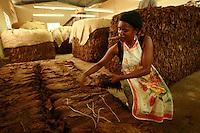 woman sorting tobacco in a cigar factory in Villas Hernandez, Dominican Republic-photograph by Owen Franken
