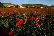 A crimson poppy field with the village Castrillo de Murcia in the background, in Burgos province, Castilla y Leon, Spain.