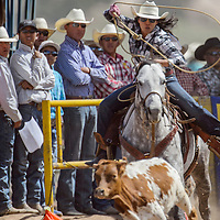 Breakawy roper Bailey Bates chases her calf from the chute during the Navajo Nation Fair Rodeo Saturday in Window Rock.
