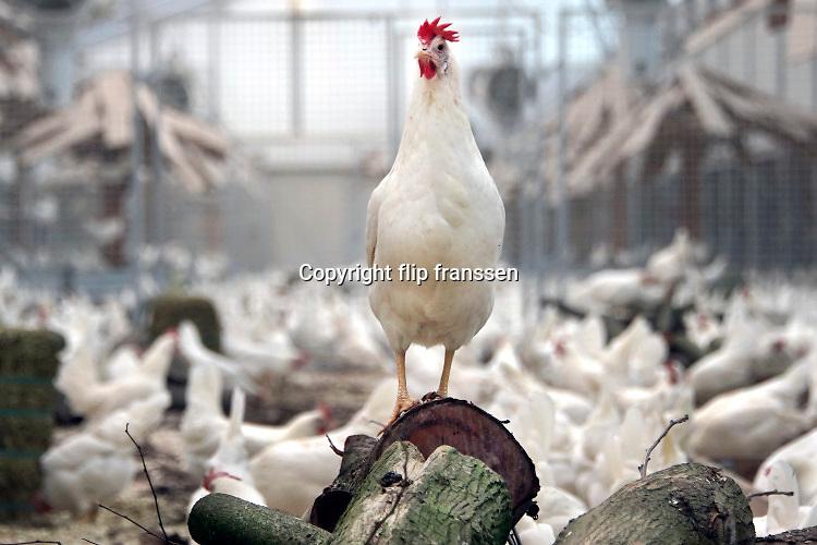 Nederland, Beuningen, 10-1-2020 Opening van eennieuwe moderne,duurzame en diervriendelijke kippenstal. De Kipster is een kippenbedrijf wat milieuvriendelijk en diervriendelijk eieren produceert. Kippen hebben ruimte en kunnen naar buiten. De stal is klimaatneutraal. Via zonnepanelen op het dak wordt eigen stroom opgewekt. Foto: Flip Franssen