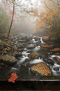Middle Prong Little Pigeon River, Great Smoky Mountains NP, TN. [ RP1180810].<br /> After a rainy night, I headed out early to Greenbrier to hike up to Ramsey Falls.  As I drove up the access road, the sun rose, somewhere, and treated me to a few hours of wonderful light, the mystery of fog, and the colors of autumn.  The trail led to a river crossing on this bridge, where I couldn't let a good pose be wasted.