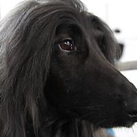 Peninsula Pet Clips