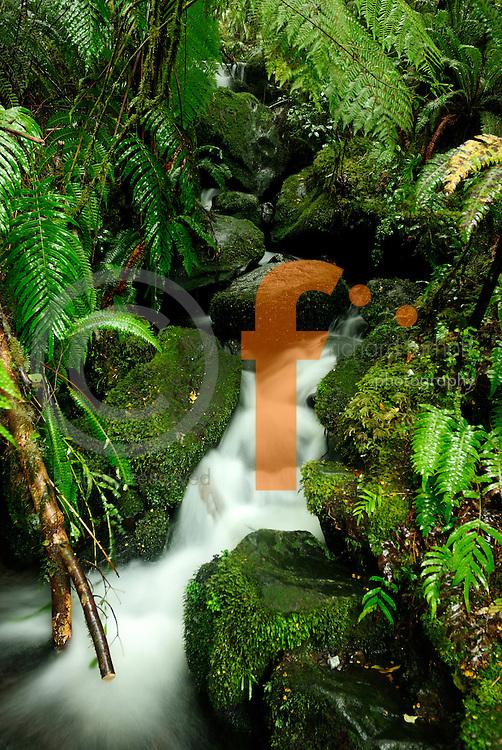 Richard Furhoff 100101_NewZealand_DSC4571.tif.Moss, Ferns and Flowing Water, Fiordlands National Park. New Zealand..
