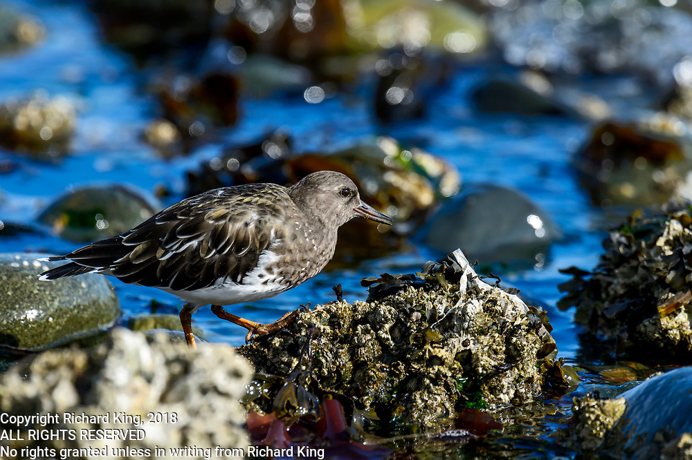 Wildlife photography from Cluxewe Beach, British Columbia, Canada