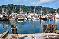 Garibaldi, Oregon, USA, fishing village and marina, 200808310738.<br /> <br /> Copyright Image from Victor Patterson, Belfast, UK<br /> <br /> t: +44 28 9066 1296 (from Rep of Ireland 048 9066 1296)<br /> m: +44 7802 353836<br /> <br /> victorpattersonbelfast@gmail.com<br /> <br /> www.victorpatterson.com OR <br /> www.images4media.com<br /> <br /> Please see my Terms and Conditions of Use at https://www.victorpatterson.com/page2<br /> It is IMPORTANT that you familiarise yourself with them.<br /> <br /> Images used on the Internet incur an additional cost and must be visibly watermarked i.e. © Victor Patterson within the body of the image and copyright metadata must not be deleted. Images used on the Internet have a size restriction of 4 kbs and are chargeable at rates available at victorpatterson.com.<br /> <br /> This image is only available for the use of the download recipient i.e. television station, newspaper, magazine, book publisher, etc, and must not be passed on to any third party. It is also downloaded on condition that each and every usage is notified within 7 days to victorpattersonbelfast@gmail.com.<br /> <br /> The right of Victor Patterson to be identified as the author is asserted in accordance with The Copyright Designs And Patents Act (1988). All moral rights are asserted.