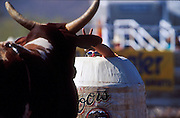 """14 APRIL 2002 - CAVE CREEK, ARIZONA, USA: Rodeo bullfighter """"Hollywood"""" Don Yates taunts a bull from the relative safety of his barrel at the Cave Creek Fiesta Days Rodeo in Cave Creek, Arizona, April 14, 2002. .PHOTO BY JACK KURTZ"""