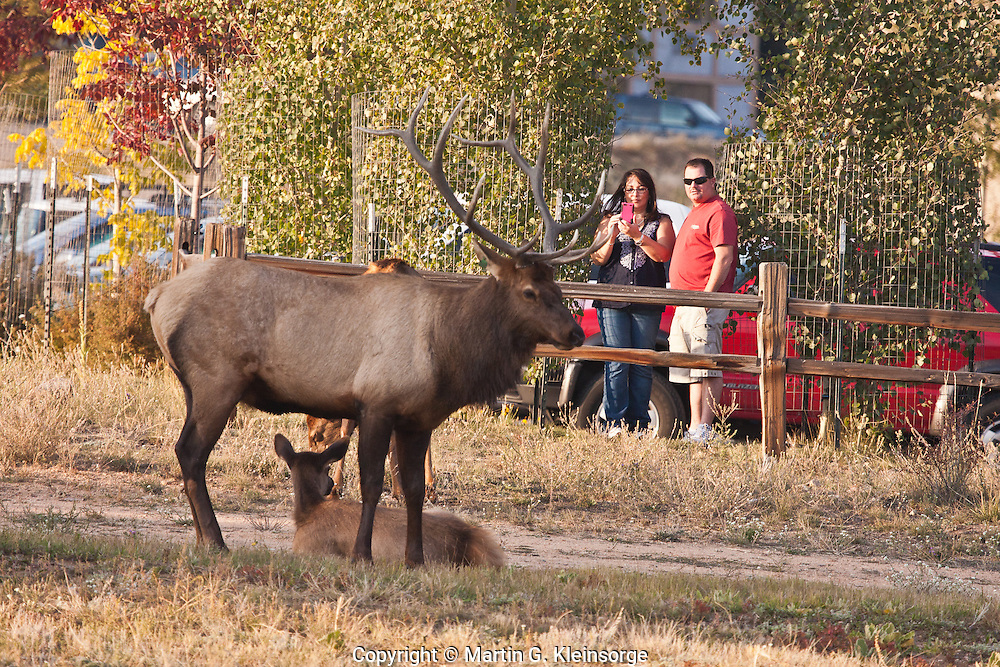 Tourist watching the elk during the rutting season.  Estes Park, Colorado.