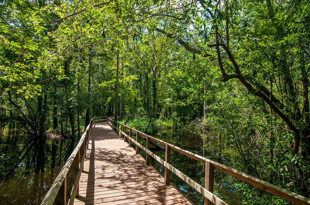 A wooden footbridge crosses a swampy area along the History Trail at Moores Creek National Battlefield in Currie, North Carolina on Friday, August 13, 2021. Copyright 2021 Jason Barnette
