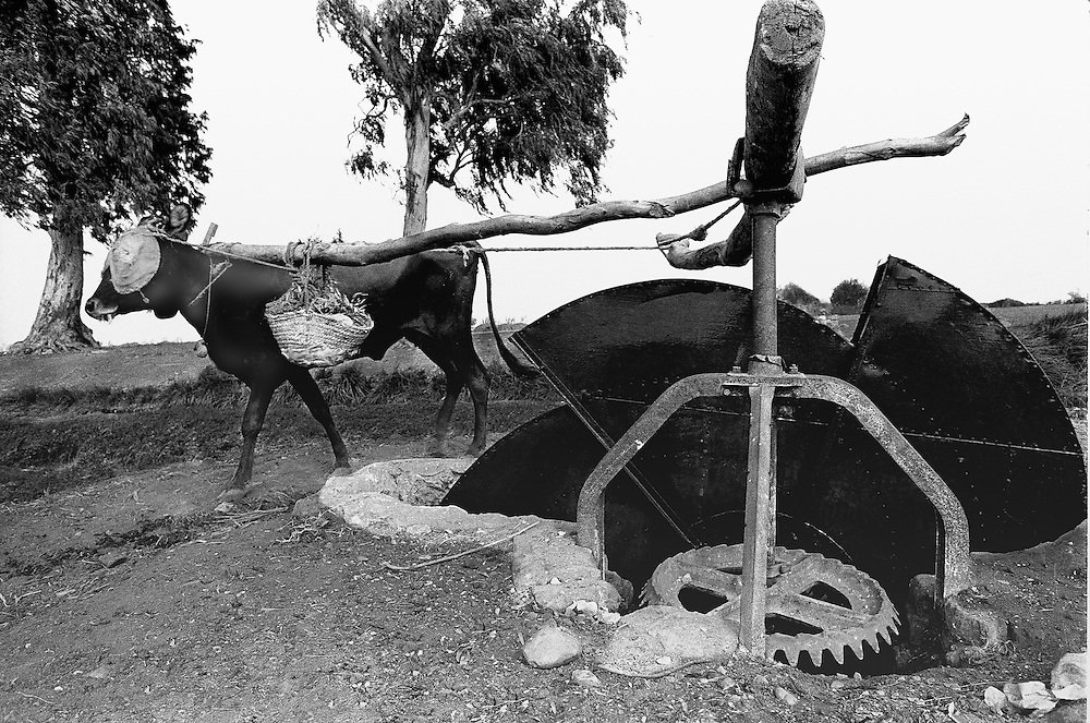 Persian water wheel turned by cattle in upper Egypt.  Closeup shows the gears of the wheel.