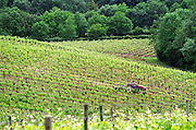 A vineyard tractor driving through the rows of vines cutting the grass between the vines at Chateau Soucherie of Pierre-Yves Tijou, Maine et Loire France Anjou