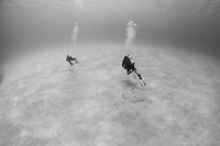 Two divers set of across a sandy bottom in search of new sights and adventure. Taken on assignment during the Bahamas Underwater Photo week 2014.
