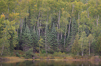 Thompson Lake and Laurentian Mixed Forest of the North Woods. Superior National Forest, North Shore Minnesota