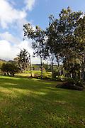 Olu Pua, Kalaheo, Kauai, Hawaii