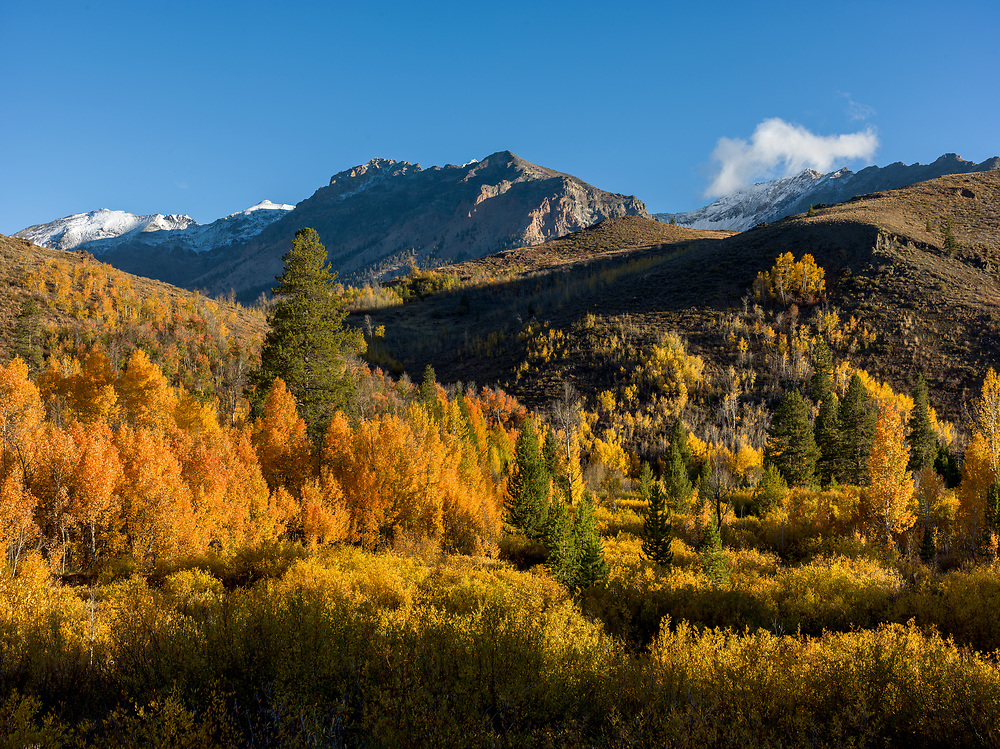 Boulder Mountains north of Sun Valley in Central Idaho peaking with fall colors and blue sky.  Licensing and Open Edition Prints.