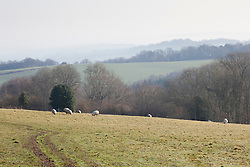 The farm at Perch Hill
