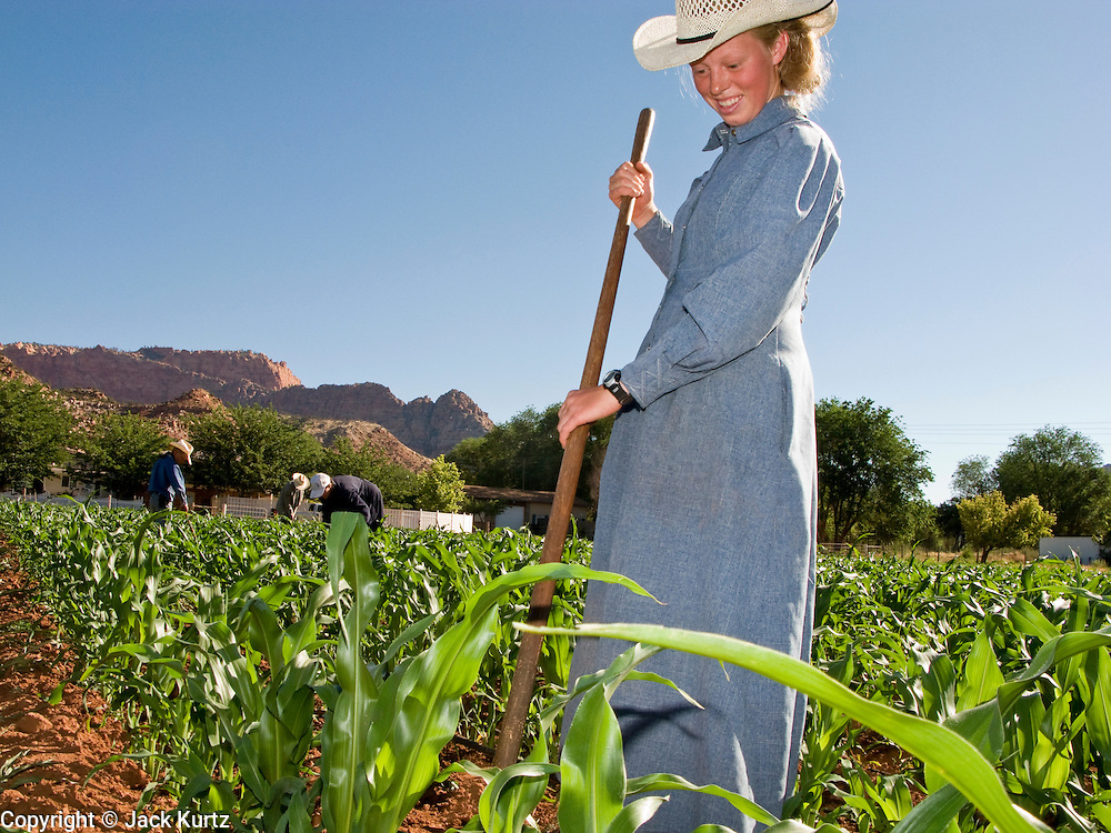 """June 16, 2008 -- COLORADO CITY, AZ: A member of the Jessop family, a polygamous family and members of the FLDS in Colorado City, AZ, weed the community corn field. The family grows about 30 percent of the food they consume and buy the rest at the town mercantile store. Although their fields are not """"organic"""" according the Department of Agriculture standards, the Jessops use as few chemicals as possible and try do weed and pest control by hand. Colorado City and neighboring town of Hildale, UT, are home to the Fundamentalist Church of Jesus Christ of Latter Day Saints (FLDS) which split from the mainstream Church of Jesus Christ of Latter Day Saints (Mormons) after the Mormons banned plural marriage (polygamy) in 1890 so that Utah could gain statehood into the United States. The FLDS Prophet (leader), Warren Jeffs, has been convicted in Utah of """"rape as an accomplice"""" for arranging the marriage of teenage girl to her cousin and is currently on trial for similar, those less serious, charges in Arizona. After Texas child protection authorities raided the Yearning for Zion Ranch, (the FLDS compound in Eldorado, TX) many members of the FLDS community in Colorado City/Hildale fear either Arizona or Utah authorities could raid their homes in the same way. Older members of the community still remember the Short Creek Raid of 1953 when Arizona authorities using National Guard troops, raided the community, arresting the men and placing women and children in """"protective"""" custody. After two years in foster care, the women and children returned to their homes. After the raid, the FLDS Church eliminated any connection to the """"Short Creek raid"""" by renaming their town Colorado City in Arizona and Hildale in Utah.  Photo by Jack Kurtz / ZUMA Press"""
