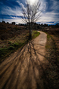 Afternoon light throws a tree's shadow on a path in Catalonia