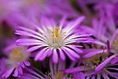 FLORA (plants & flowers)