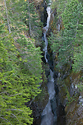 The Box Canyon of Mount Rainier National Park is an area where the Muddy Fork of the Cowlitz River carved a narrow gorge more than a hundred feet deep, but only 15 to 30 feet wide.