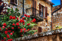 """""""Ancient Orvieto roses glow after the rain""""...<br /> <br /> Orvieto is one of the most striking, memorable, and enjoyable hill towns in central Italy. Less than 90 minutes from Rome, Orvieto sits majestically high above the valley floor atop a big chunk of volcanic stone called tufa and overlooking cypress-dotted Umbrian plains and vineyards. The ancient city rewards one with a peaceful and historical stroll back in time to the days of the Etruscans, who built this cliff-top village over 2000 years ago for protection from their enemies. The ancient Etruscan wall still stands today presenting colorful Cliffside views, and protecting the famous Duomo di Orvieto, the Palazzo del Popolo, and other antique treasures. The blossoming red roses emanate vibrant beauty in contrast to the ancient charismatic backdrop of Orvieto."""