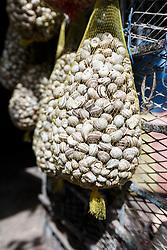 Bags of snails in market, Fes al Bali medina, Fes, Morocco
