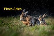 Photo Sales