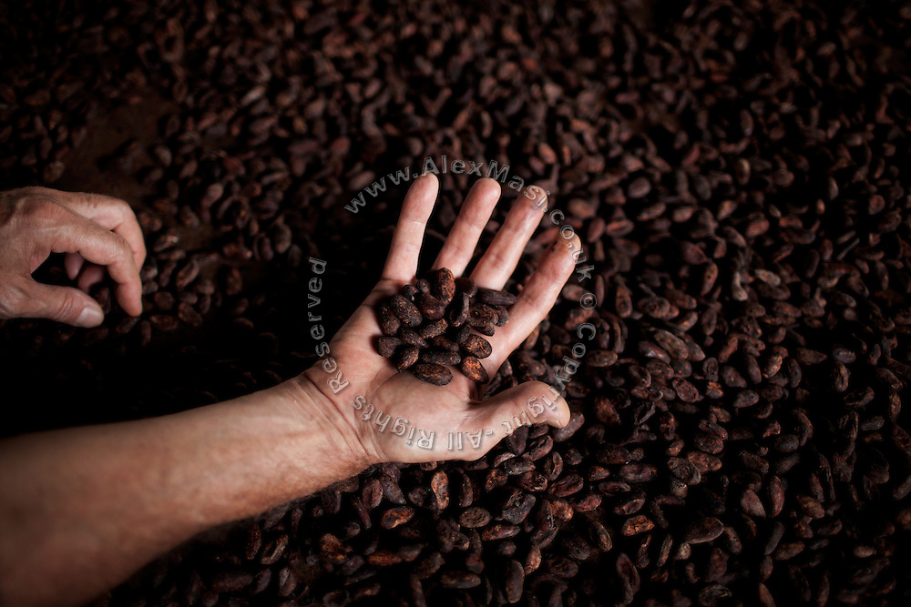 Claudio Corallo is showing a handful of cocoa drying on a wood desiccator in the technical area of his plantation on the island of Principe, Sao Tome and Principe, (STP) a former Portuguese colony in the Gulf of Guinea, West Africa.
