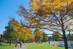 United States, Washington, Kirkland, Marina Park in fall
