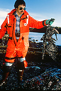 Alaska. Man Worker pick up a carcass of a dead oiled bird in wake of Exxon Valdez oil spill in Prince William Sound.