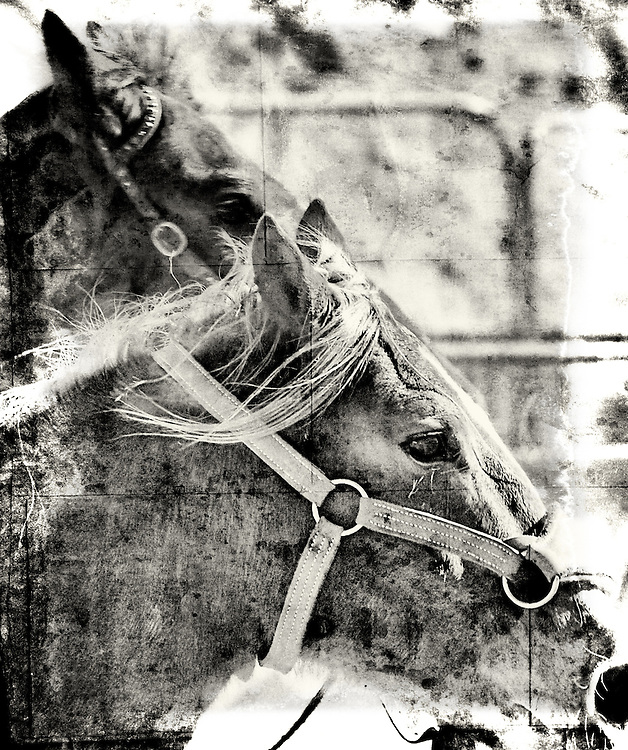 Rodeo Series 2011 - The Spirit, Beauty, and Strength of the American West...A Craig W. Cutler Photography 'American West' HIGHLY LIMITED EDITION of only 3 Prints of each Image - Worldwide! <br /> <br /> Craig W. Cutler Photography.<br /> DesignLIFE by Craig W. Cutler Photography.