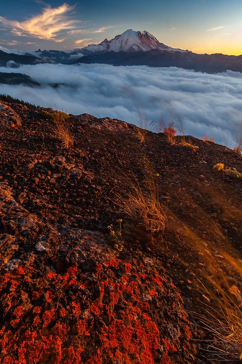 Norse Peak Wilderness, Mount Baker-Snoqualmie National Forest, Washington, USA. View of Mount Rainier, evening light.