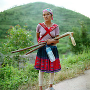 A Miao/Hmong ethnic minority woman carries a baby and a pair rice beaters on her way back from threshing rice. The People's Republic of China recognises 55 ethnic minority groups in China in addition to the Han majority. The ethnic minorities form 9.44% of mainland China and Taiwan's total population and the greatest number can be found in Yunnan Province, 34% (25 ethnic groups).