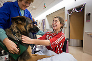 30 DECEMBER 2009 -- PHOENIX, AZ: Joan Solie (CQ) (LEFT) introduces Hans (CQ), a therapy dog, to Mackenzie Saunders (CQ) before Mackenzie's physical therapy  at St. Joseph's Hospital in Phoenix Wednesday. Mackenzie was knocked down by another player during a soccer game. She finished the game but later in the day her legs started hurting and her parents took her to a hospital. Three hospitals later, she was in St. Joseph's with a diagnosis of a swollen spine and she couldn't walk. Now she's in physical therapy. She is expected to make a full recovery but her doctors have said she won't be able to play soccer for at least another 16 months.  Photo by Jack Kurtz