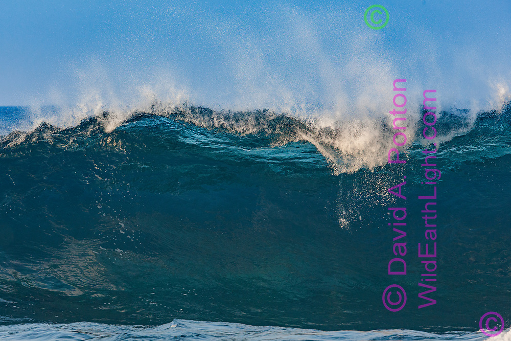 Breaking wave briefly shows a beautiful smoothly sculpted inner surface with light coming through from the back, Hawaii, © David A. Ponton