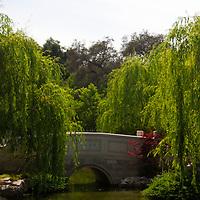 USA, California, San Marino. The Huntington Library Chinese Gardens Pond.