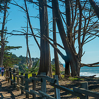 Hikers walk through a cypress forest above Pacific Coast cliffs in Moss Beach, California.