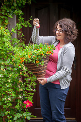 Putting up a hanging basket of Calibrachoa by a front door.