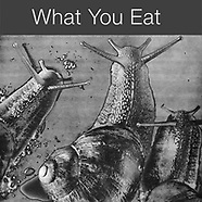 YOU ARE WHAT YOU EAT - Abstract Solaroid Photos Food Ingredients by Photographer Paul E Williams