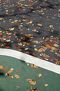autumn leaves embedded into asphalt road surface