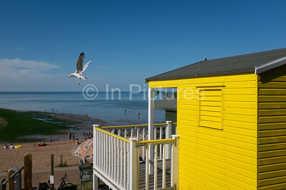 A seagull lifts off from the roof of a beach hut on the seafront promenade at Whitstable, on 18th July 2020, in Whitstable, Kent, England.