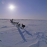 ARCTIC BLAST EXPEDITION.  Dogsled crosses sea ice east of King William Island, Nunavut, Canada (MR).