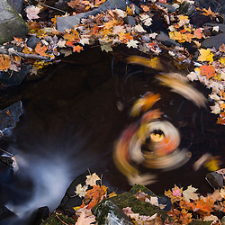 Leaves swirl in a small stream in fall on Hyland Hill in Westmoreland, New Hampshire.