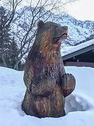 Bear emerges from hibernation, Leavenworth, Washington, USA, Photo ©Dr. Dale Swanson