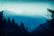View of the misty Valmalenco/Lombardia/Italy at sunrise - texturized photograph<br /> <br /> Prints & more:https://society6.com/product/blue-valmalenco-alps-at-sunrise_print#1=45