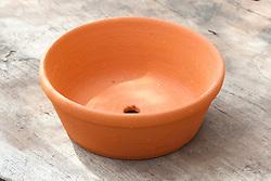 Terracotta crocus dish