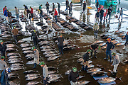 Tuna auction in Nachikatsuura, Higashimuro District, Wakayama Prefecture, Japan. In Nachikatsuura, don't miss the impressive tuna market auction at 7:00am, easily viewed from above in the open public gallery. (In contrast, Tokyo's restrictive early morning fish auction at Toyosu Market limits viewers via registration and a wall of glass). Japan is the world's biggest consumer of tuna.